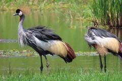 uganda-wildlife-safaris-kafu-river-basin-55