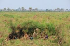 uganda-wildlife-safaris-kafu-river-basin-56