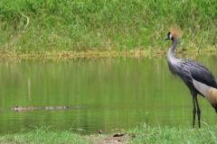 uganda-wildlife-safaris-kafu-river-basin-57