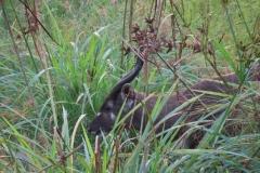 uganda-wildlife-safaris-kafu-river-basin-64