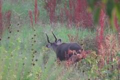 uganda-wildlife-safaris-kafu-river-basin-65