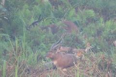 uganda-wildlife-safaris-kafu-river-basin-67