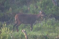 uganda-wildlife-safaris-kafu-river-basin-68