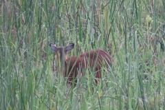 uganda-wildlife-safaris-kafu-river-basin-72