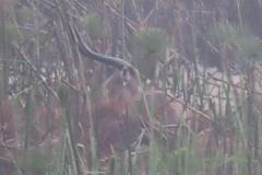 uganda-wildlife-safaris-kafu-river-basin-73