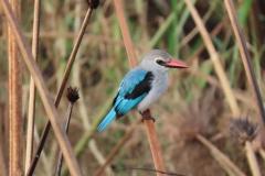 uganda-wildlife-safaris-kafu-river-basin-74