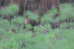 uganda-wildlife-safaris-kafu-river-basin-78