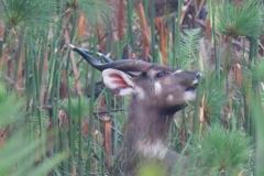 uganda-wildlife-safaris-kafu-river-basin-79