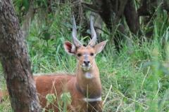 uganda-wildlife-safaris-kafu-river-basin-81