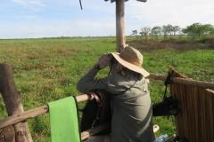 uganda-wildlife-safaris-kafu-river-basin-82