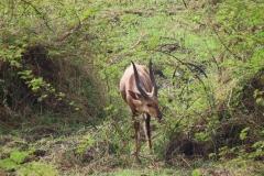 uganda-wildlife-safaris-kafu-river-basin-84