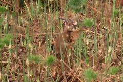 uganda-wildlife-safaris-kafu-river-basin-85