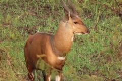 uganda-wildlife-safaris-kafu-river-basin-86