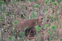 uganda-wildlife-safaris-kafu-river-basin-87