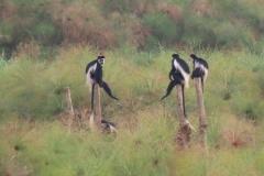 uganda-wildlife-safaris-kafu-river-basin-9