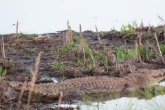 uganda-wildlife-safaris-kafu-river-basin-92
