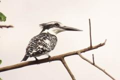uganda-wildlife-safaris-kafu-river-basin-94