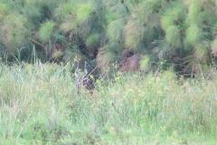 uganda-wildlife-safaris-kafu-river-basin-95
