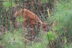 uganda-wildlife-safaris-kafu-river-basin-97