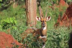 uganda-wildlife-safaris-kafu-river-basin-98