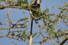uganda-wildlife-safaris-kafu-river-basin-99