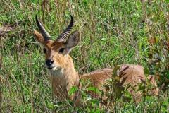 uganda-wildlife-safaris-kidepo-10