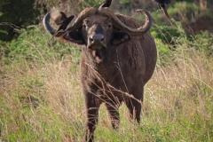 uganda-wildlife-safaris-kidepo-15