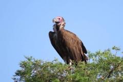 uganda-wildlife-safaris-kidepo-19