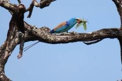 uganda-wildlife-safaris-kidepo-2