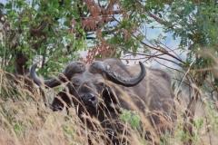 uganda-wildlife-safaris-kidepo-20