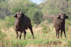 uganda-wildlife-safaris-kidepo-21