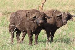 uganda-wildlife-safaris-kidepo-22