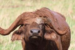 uganda-wildlife-safaris-kidepo-24