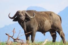 uganda-wildlife-safaris-kidepo-26