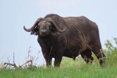 uganda-wildlife-safaris-kidepo-28