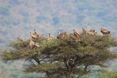 uganda-wildlife-safaris-kidepo-4