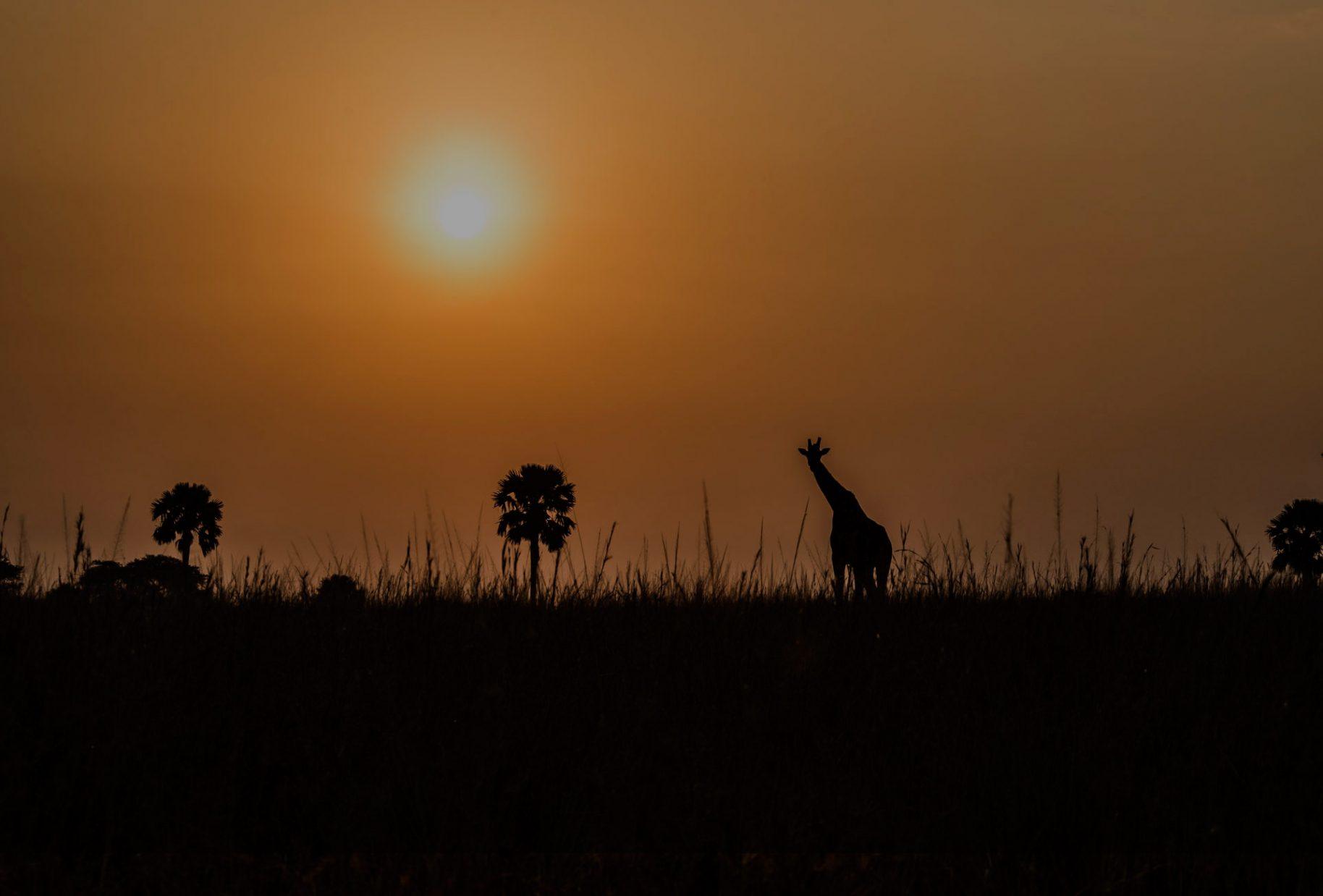 Uganda-Wildlife-Safaris-1