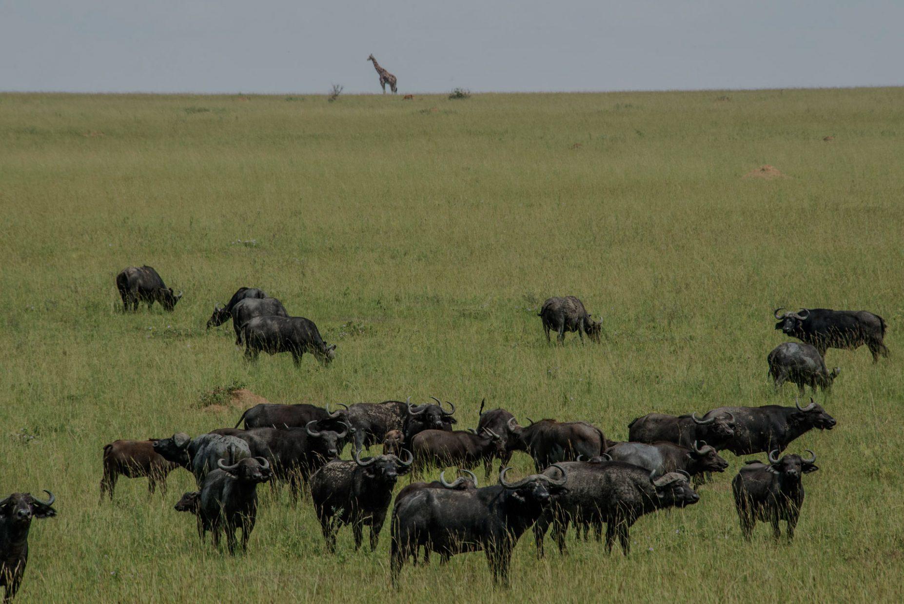 Uganda-Wildlife-Safaris-2