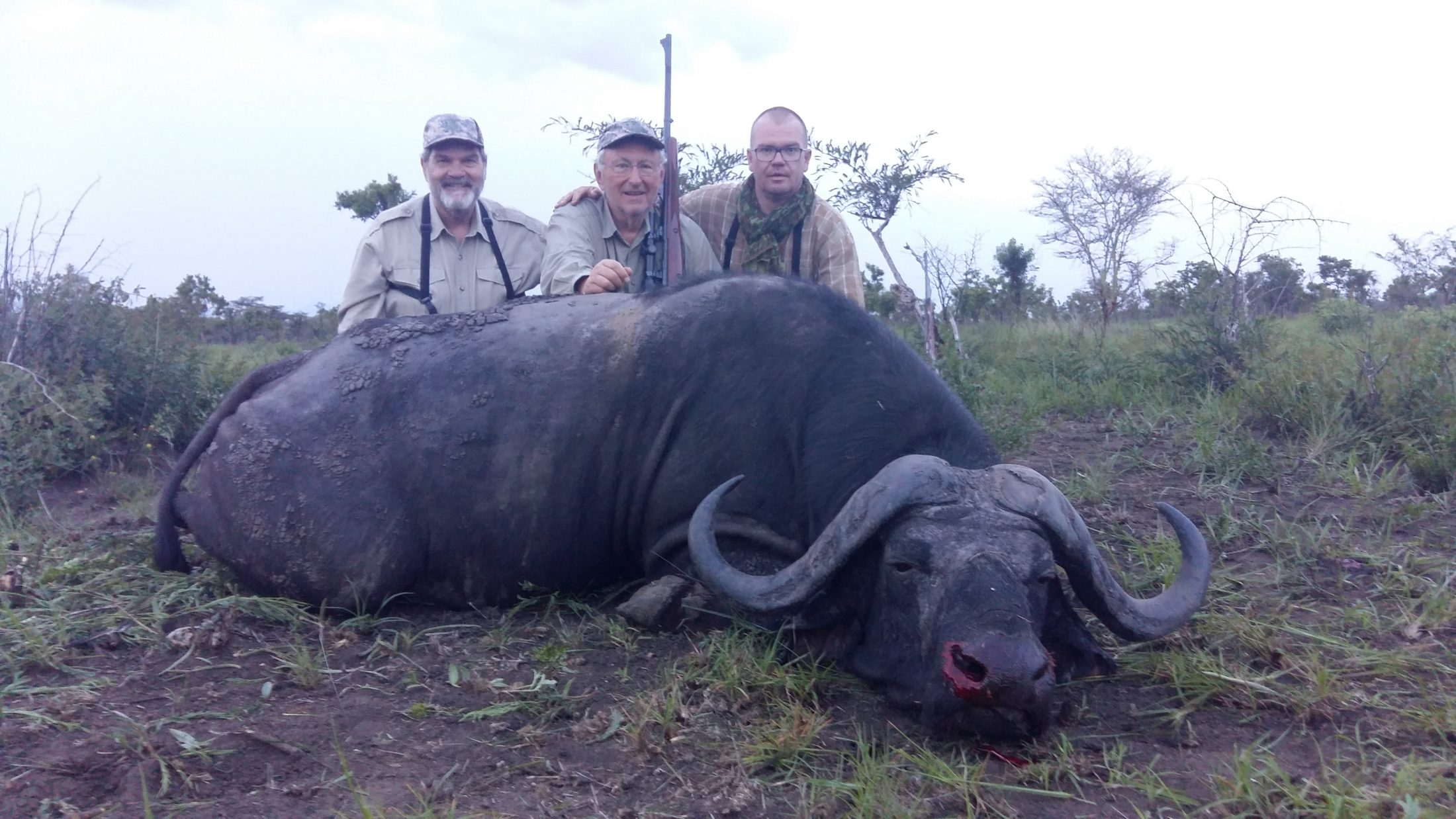 uganda wildlife safaris trophy photos 2017 (4) buffalo